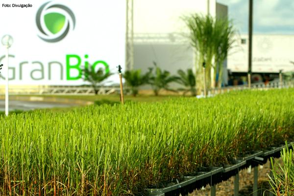 gran-bio-combustivel