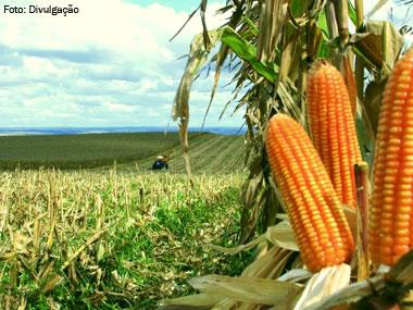Valor bruto da produção agropecuária atinge R$ 421,5 bi em 2013