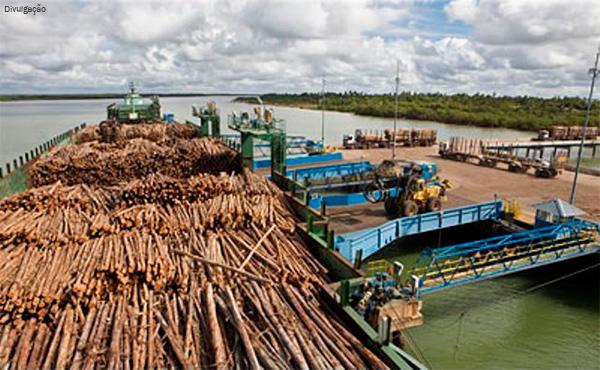 transporte-de-madeira-rio